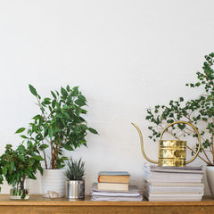 Follow Joanna Gaines lead and add life to your space!